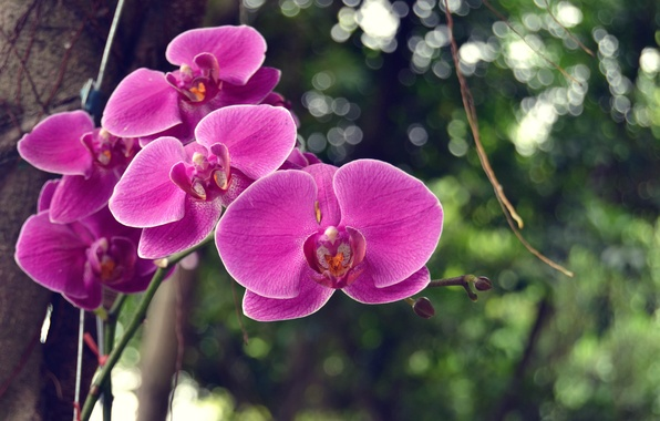 Picture tree, foliage, branch, orchids, flowers, bokeh