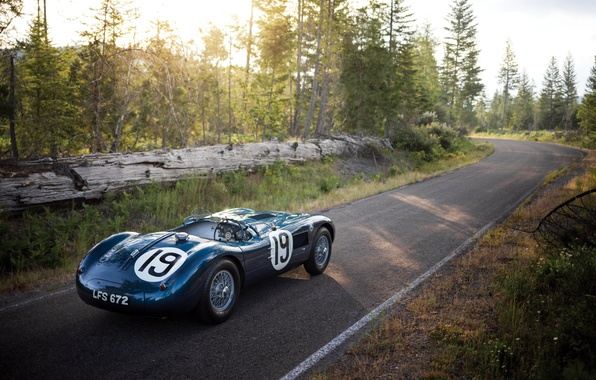Picture Jaguar, Jaguar, 1951, C-Type