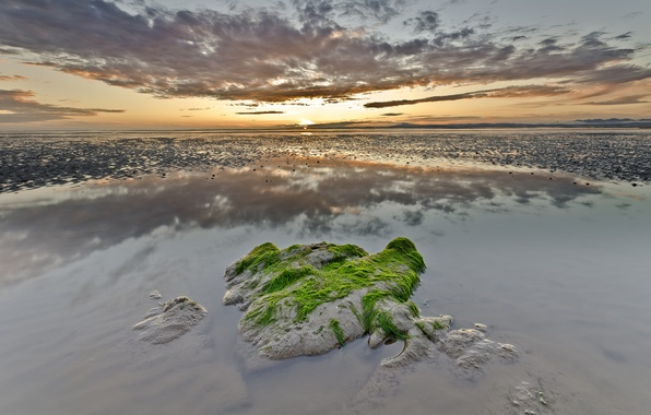 Picture sea, clouds, algae, sunset, reflection, stone, stranded, shoots