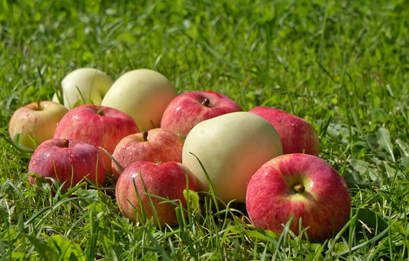 Picture greens, grass, glade, apples, fruit, wet