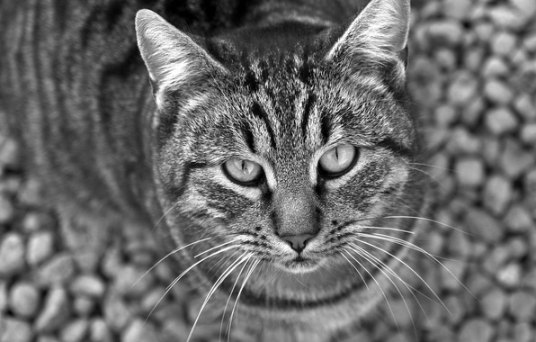 Picture look, black and white, Koshak