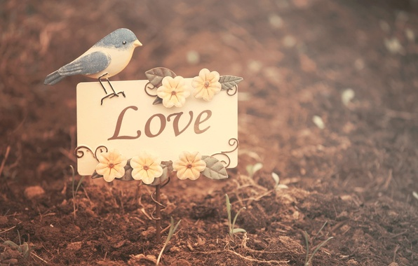 Picture leaves, flowers, nature, background, bird, Wallpaper, mood, love, bird, flowers, lugovi