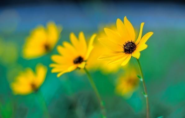 Picture macro, flowers, focus, blur, yellow, bokeh