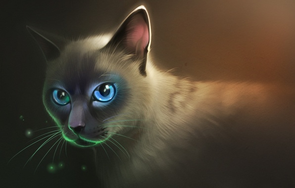 Picture cat, look, fluffy, art, blue eyes