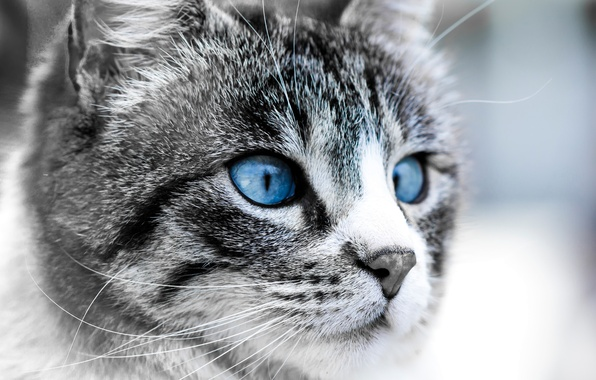 Picture cat, eyes, face, The moon, blue