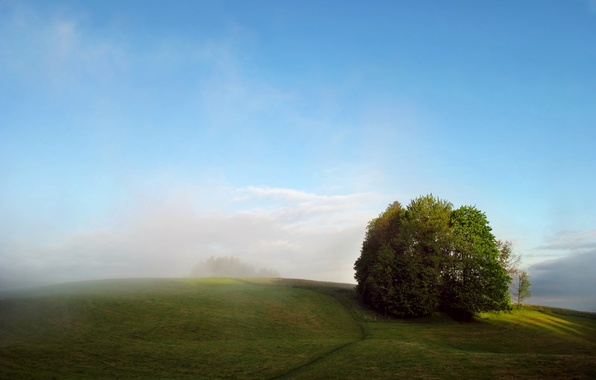 Picture field, summer, trees, fog