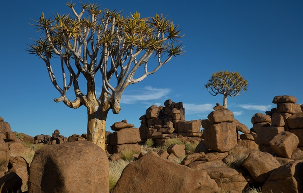 Picture the sky, trees, landscape, stones, Africa, Namibia