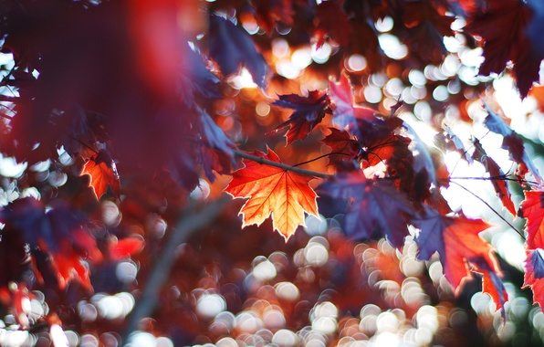 Picture autumn, forest, leaves, tree, branch, maple