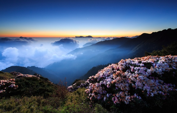 Picture the sky, clouds, sunset, flowers, mountains, night, fog, hills, the evening, morning