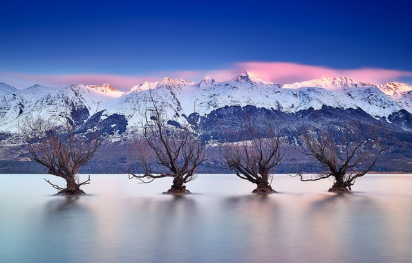 Picture trees, mountains, lake, New Zealand, New Zealand, Queenstown, Lake Wakatipu, Queenstown, lake Wakatipu, Southern Alps, …