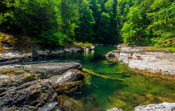 Picture greens, forest, summer, trees, stones, Canada, river, Sunny, Cowichan River Provincial Park