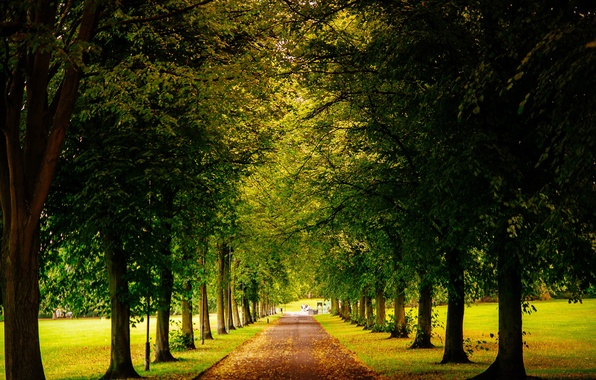 Picture road, leaves, trees, Park, England, yellow, green, UK, alley, fallen, Sheffield, Sheffield