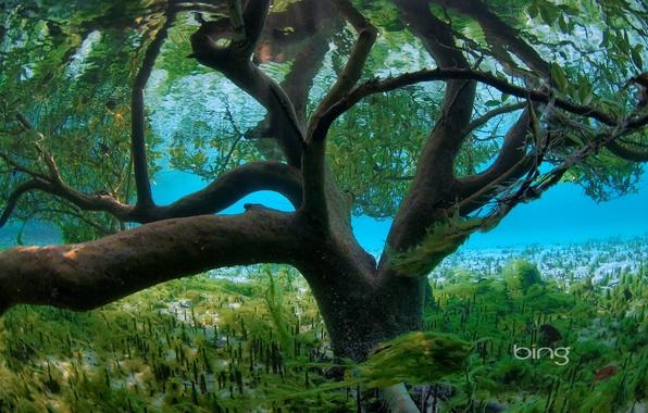 Picture sea, leaves, water, algae, tree, the bottom, flood, the flood, underwater world