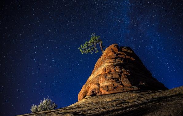 Picture the sky, stars, night, nature, tree, rocks