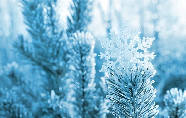Picture winter, macro, snow, needles, branches, nature, tree, pine, snowflake, bokeh