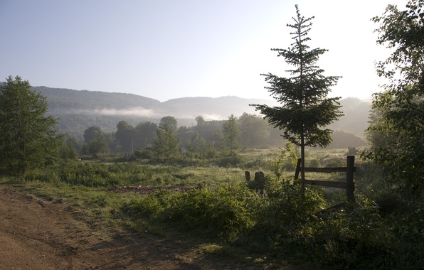 Picture trees, landscape, mountains, nature, fog, morning
