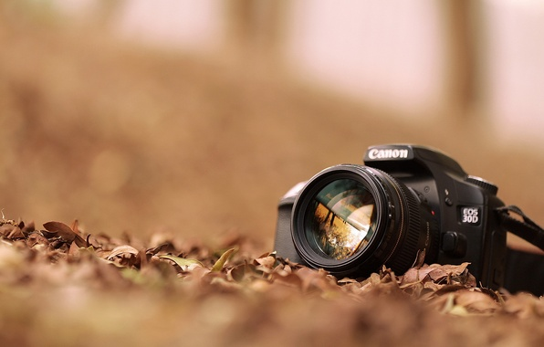 Picture leaves, the camera, canon