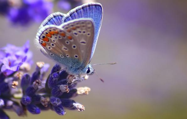 Picture flower, macro, butterfly, blur, blue