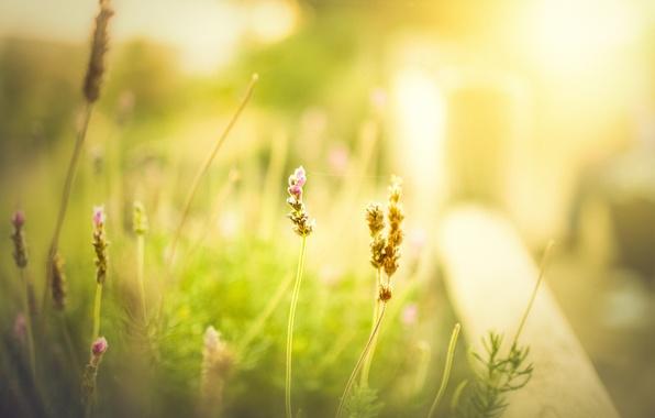 Picture greens, field, summer, grass, flowers, background, Wallpaper, blur, spring, morning, meadow, day, wallpaper, flower, widescreen, …