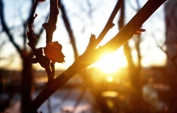 Picture autumn, macro, rays, trees, sunset, freshness, branches, nature, sheet, cool, the sun