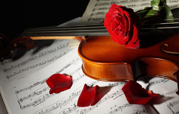 Picture flowers, notes, violin, roses, petals