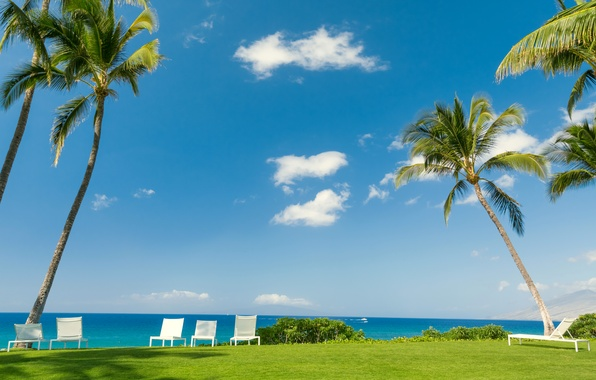 Picture sea, greens, the sky, grass, the sun, clouds, tropics, palm trees, lawn, stay, shore, chairs, …