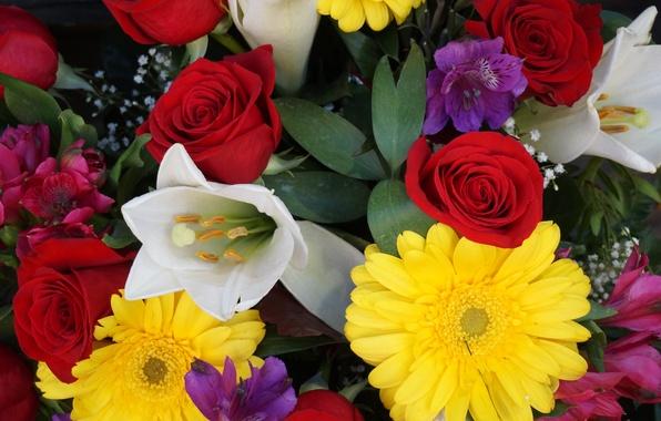Picture paint, rose, Tulip, bouquet, petals, gerbera