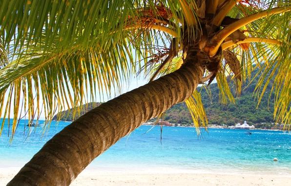 Picture sea, leaves, Palma, tree, mountain, trunk