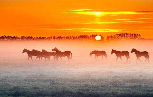 Picture field, trees, fog, sunrise, the fence, horse, farm, orange sky