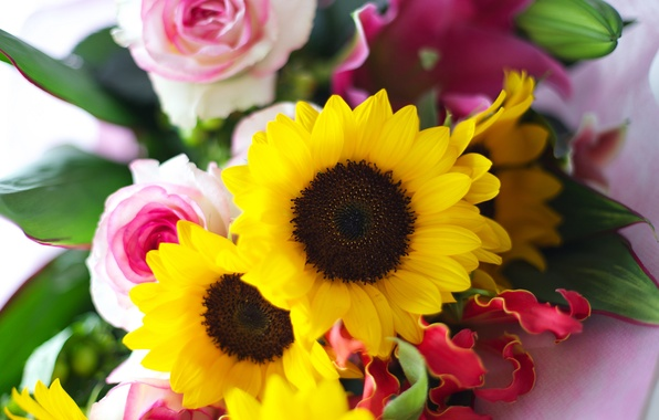 Picture leaves, sunflowers, flowers, roses, bouquet, yellow, petals, pink