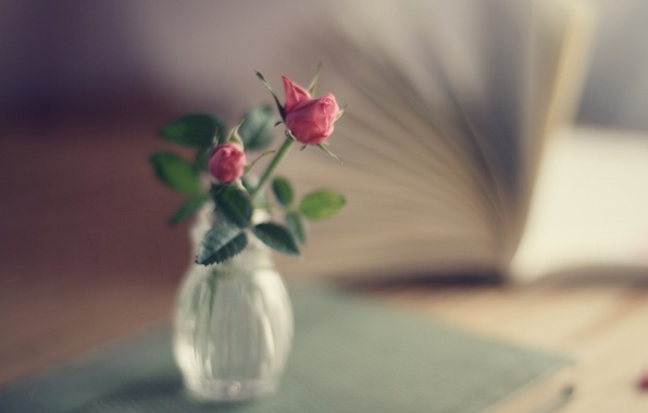Picture roses, bouquet, focus, book, vase, pink