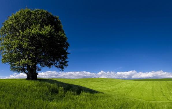 Picture Landscape, Cardiff, Green Horizons, Fields, Newpor