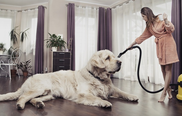 Picture girl, creative, room, dog, plants, chair, curtains, vacuum cleaner
