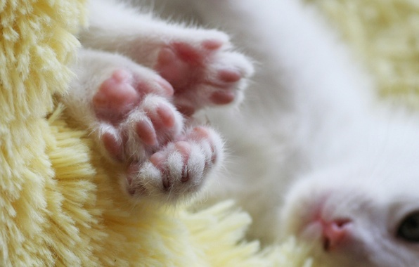 Picture white, face, paws