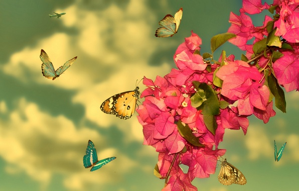 Picture Red, Flowers, Butterfly
