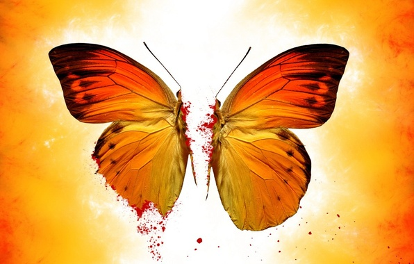 Picture yellow, butterfly, blood
