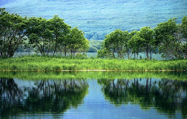Picture greens, water, trees, landscape, nature, reflection, plants