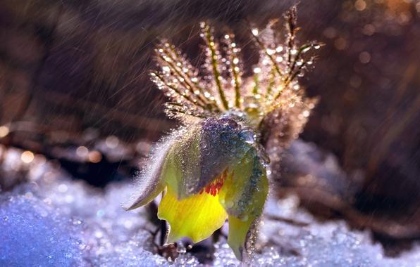 Picture drops, light, snow, rain, bokeh, cross, dream grass