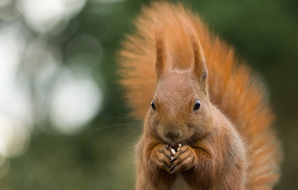 Picture macro, nature, green, glare, background, animal, walnut, protein, nibbles