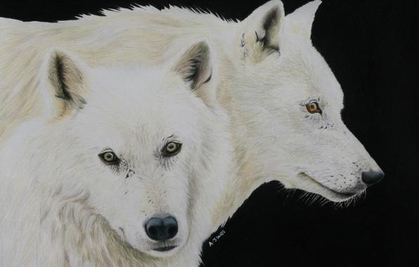 Picture look, predators, wolves, painting
