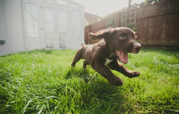 Picture joy, dog, running, puppy, weed