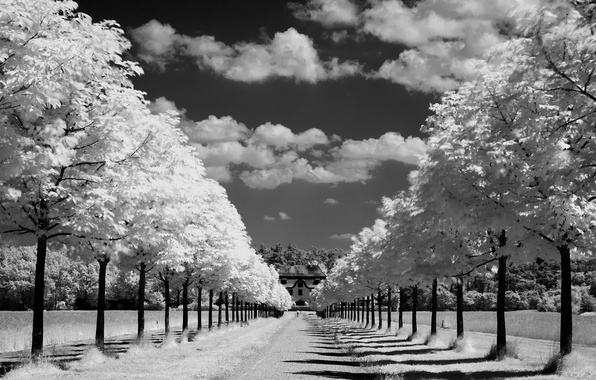 Picture road, the sky, the sun, clouds, rays, trees, nature, photo, background, Wallpaper, white, horizon, black, …
