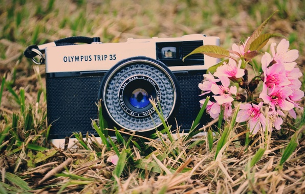 Picture greens, grass, flowers, background, widescreen, Wallpaper, mood, camera, the camera, wallpaper, widescreen, camera, background, full …