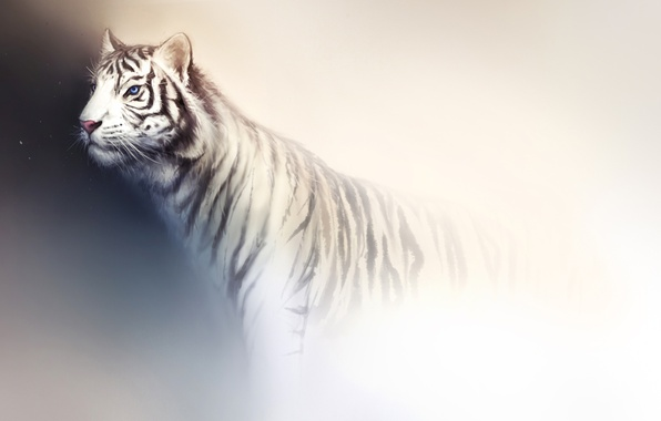 Picture white, light, tiger, background, predator, art, wild cat