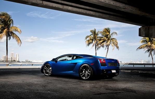 Picture the sky, blue, palm trees, Lamborghini, Gallardo, skyscrapers, Lamborghini, blue, Lamborghini, the rear part, Gallardo