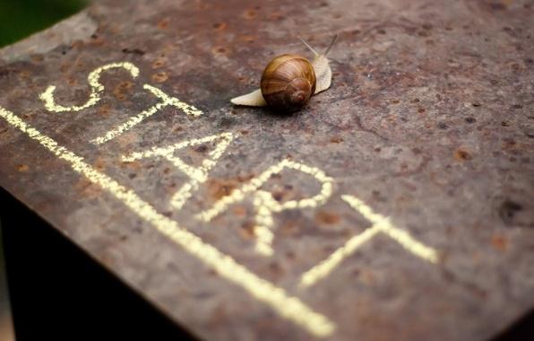 Picture background, the inscription, Wallpaper, mood, snail, wallpaper, start, widescreen, background, beginning, full screen, HD wallpapers, …