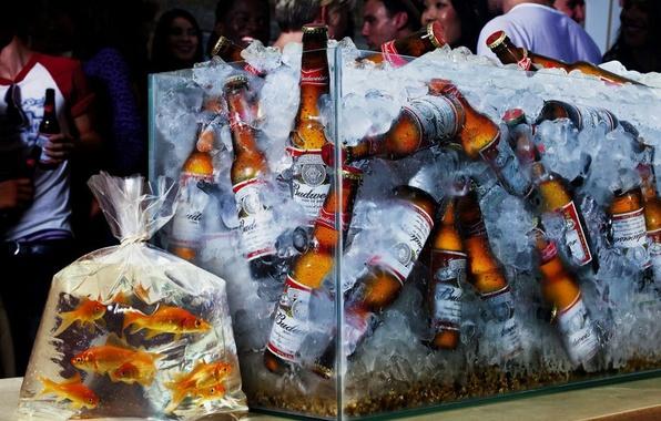 Picture fish, aquarium, beer