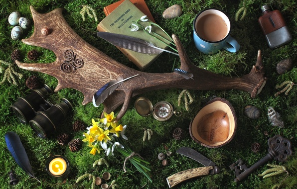 Picture flowers, pebbles, watch, books, moss, candle, feathers, key, mug, binoculars, horns, bumps, snowdrop, Narcissus