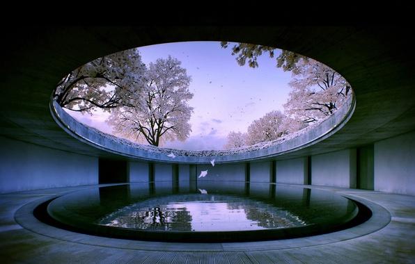 Picture water, nature, the building, Sakura