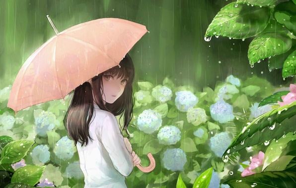 Picture leaves, drops, rain, umbrella, girl, hydrangea, sankarea